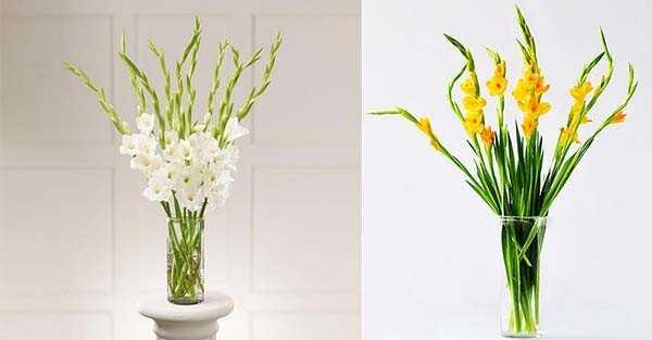 Cách cắm hoa Lay Ơn đẹp và tươi lâu
